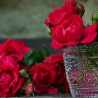 Как максимально долго сохранить розы в воде