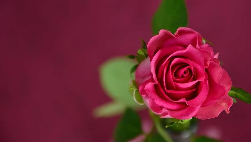 Сколько хранятся розы