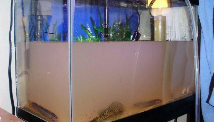 мутнеет вода в аквариуме причина как устранить