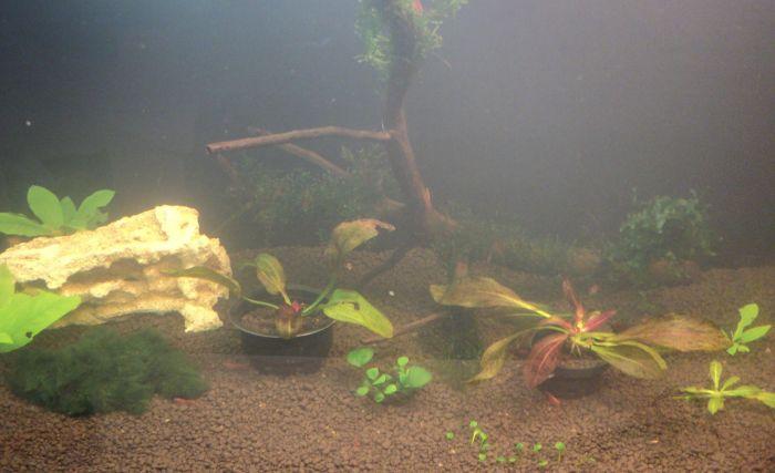 мутная вода в домашнем аквариуме