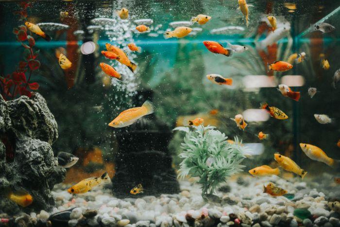 сколько рыб должно быть в аквариуме