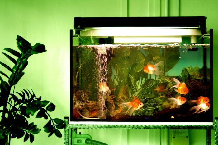 красивый чистый аквариум